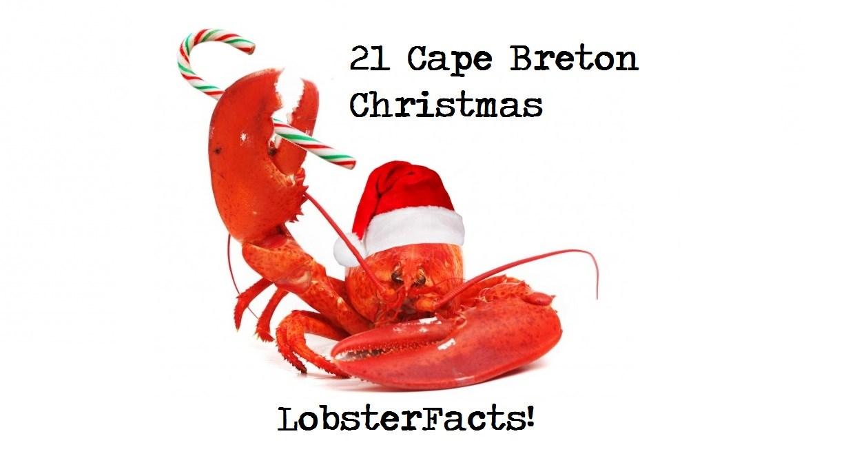 21 Cape Breton Christmas LobsterFacts | goCapeBreton.com